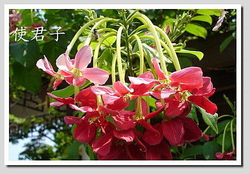 植物打油詩(二)