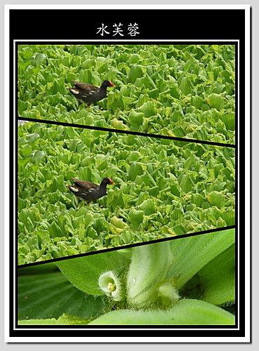 植物打油詩(一)
